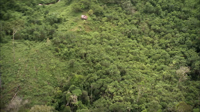 track over coca plantation amidst vast rainforest available in hd. - copertura di alberi video stock e b–roll