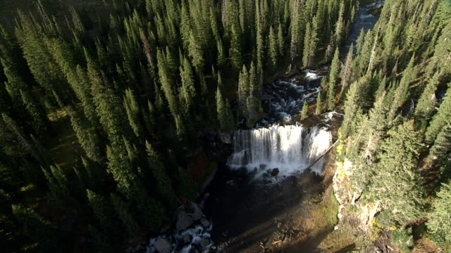 track over colonnade falls and conifer forest, yellowstone, usa - yellowstone national park stock videos & royalty-free footage