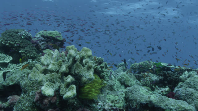 track over coral reef and fishes, fiji - coral stock videos & royalty-free footage