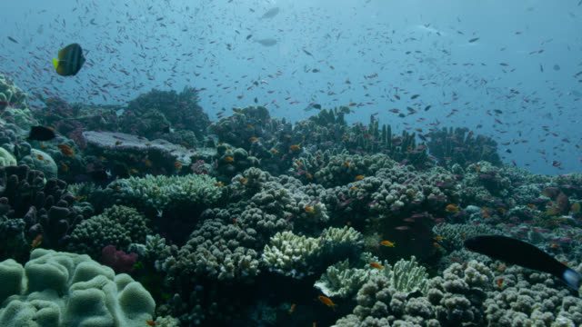 track over coral reef and fishes, fiji - ecosystem stock videos & royalty-free footage