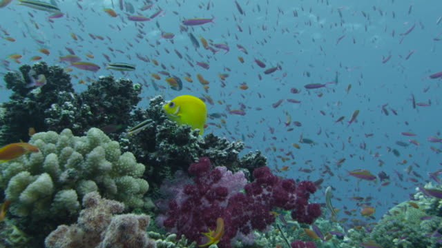 stockvideo's en b-roll-footage met track over coral reef and fishes, fiji - school met vissen