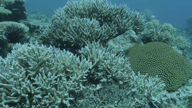 track over coral reef, fiji - reef stock videos & royalty-free footage