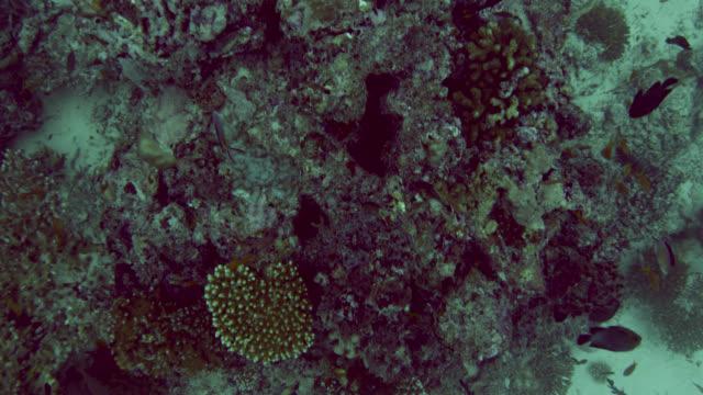 track over coral reef, indian ocean. - indian ocean stock videos & royalty-free footage