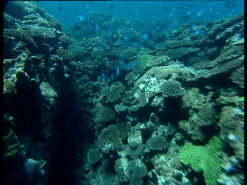 track over coral reef, ningaloo, south australia - ningaloo reef stock videos & royalty-free footage