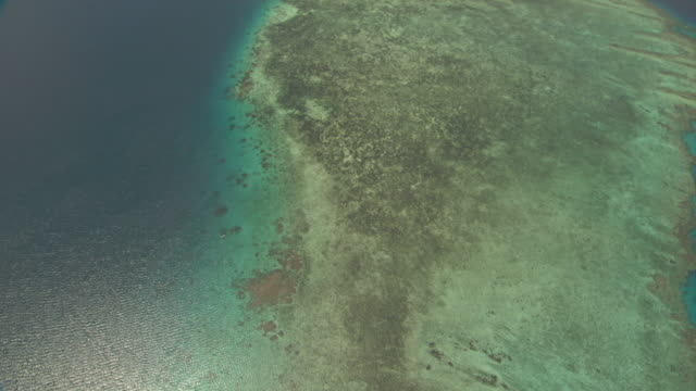 track over coral reef. - mangrove tree stock videos & royalty-free footage