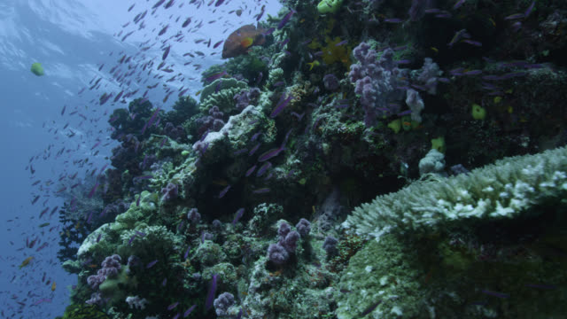 Track over coral reef wall and fishes, Fiji