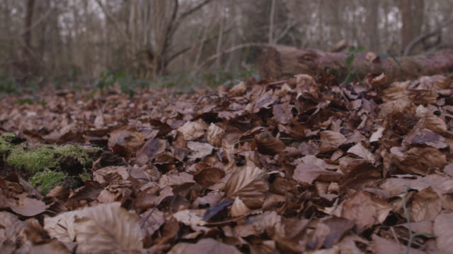track over dead leaves on forest floor in autumn, gloucestershire, england - töten stock-videos und b-roll-filmmaterial