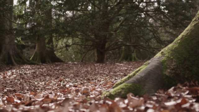 Track over dead leaves on forest floor in Autumn, Gloucestershire, England