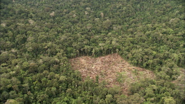 track over deforestation clearing in midst of rainforest available in hd. - copertura di alberi video stock e b–roll