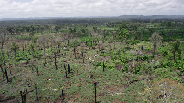 track over deforested area, cambodia. - forestry industry stock videos & royalty-free footage