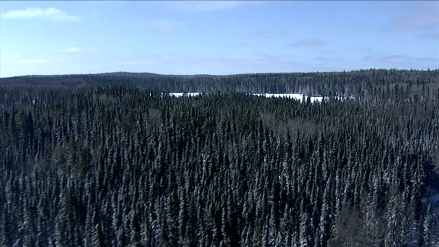 track over dense boreal forest surrounding a frozen lake, canada. available in hd. - boreal forest stock videos & royalty-free footage