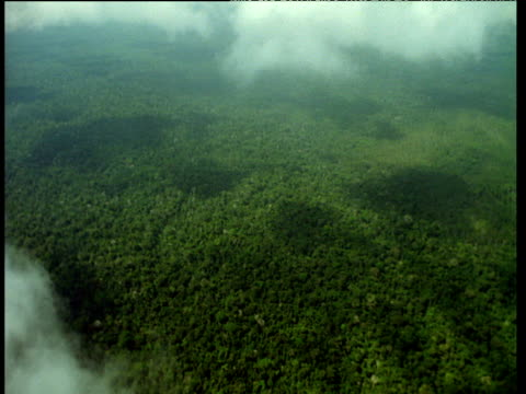 Track over dense rainforest with wispy white clouds swirling above, Africa