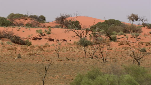 track over desert shrubs and trees dotting the vast outback in northern queensland. available in hd. - outback stock videos & royalty-free footage