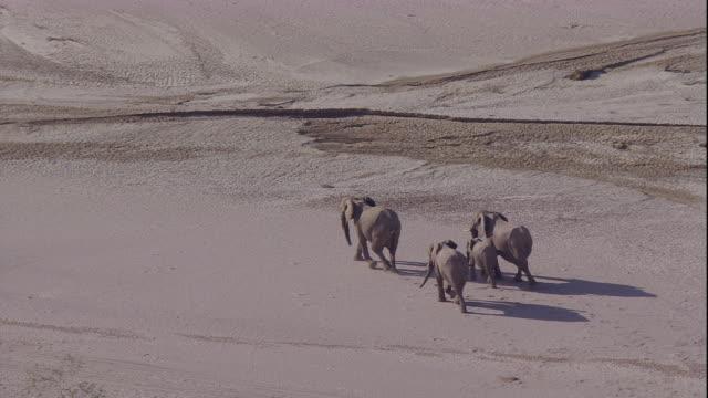 track over elephants in desert, skeleton coast, namibia - namibia stock videos & royalty-free footage