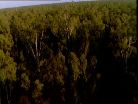 "vidéos et rushes de track over eucalyptus forest, murray basin, australia - ""bbc natural history"""