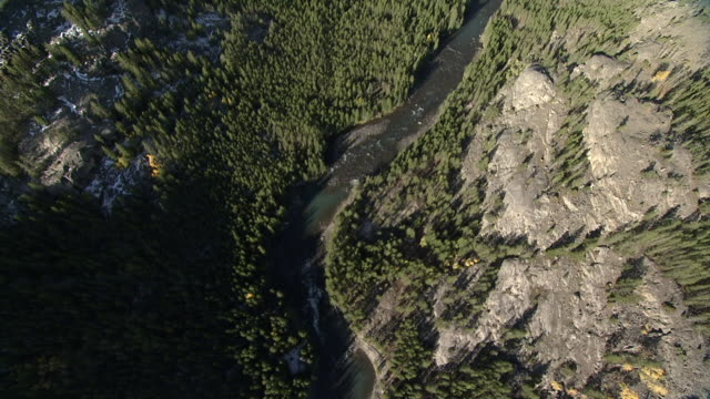 track over forested river valley, yellowstone, usa - river yellowstone stock videos and b-roll footage