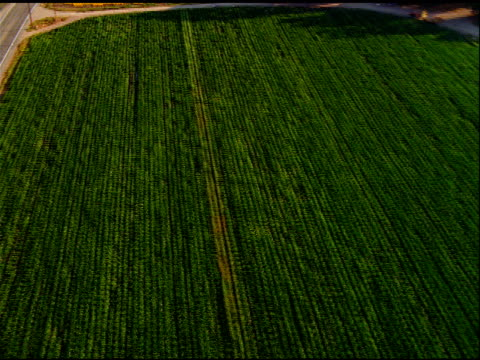 track over green and yellow fields towards roads and houses, california - veicolo di terra per uso personale video stock e b–roll