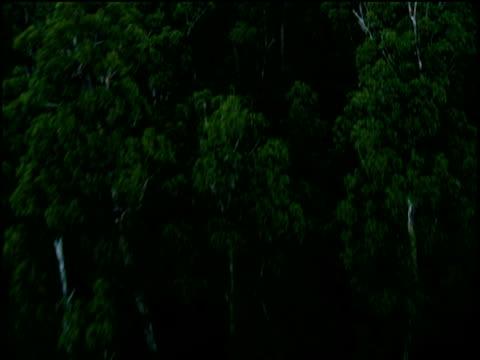 track over lush rain forest to area cleared by napalm tasmania - framsteg bildbanksvideor och videomaterial från bakom kulisserna