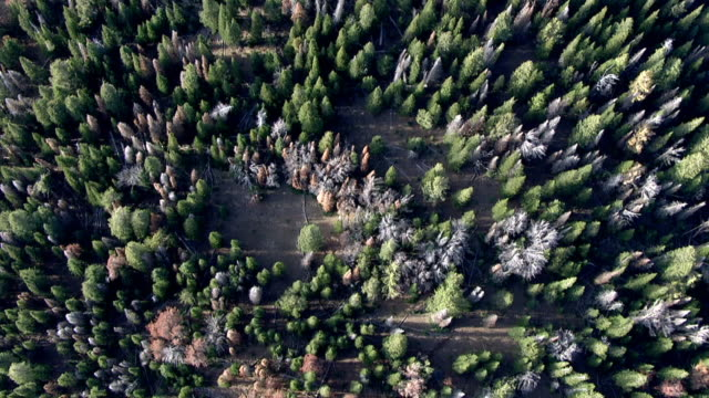 """vidéos et rushes de track over mixed forest, yellowstone, usa - """"bbc natural history"""""""