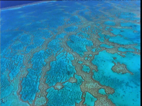 track over mottled turquoise tropical reef and shallow sea, great barrier reef, queensland, australia - shallow stock videos & royalty-free footage