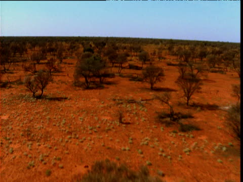track over mulga trees in orange outback, northern territory, australia - orange colour stock videos & royalty-free footage