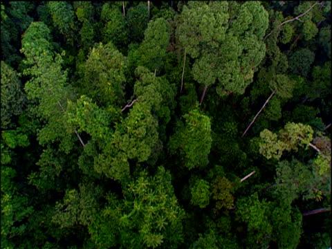 track over rainforest canopy, borneo - ボルネオ島点の映像素材/bロール