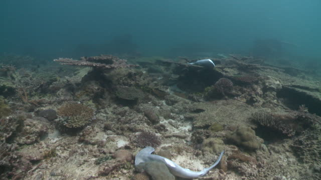 Track over reef with discarded de-finned sharks dead lying on reef