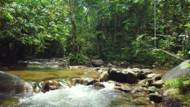 track over river flowing through rainforest - malaysia stock videos & royalty-free footage