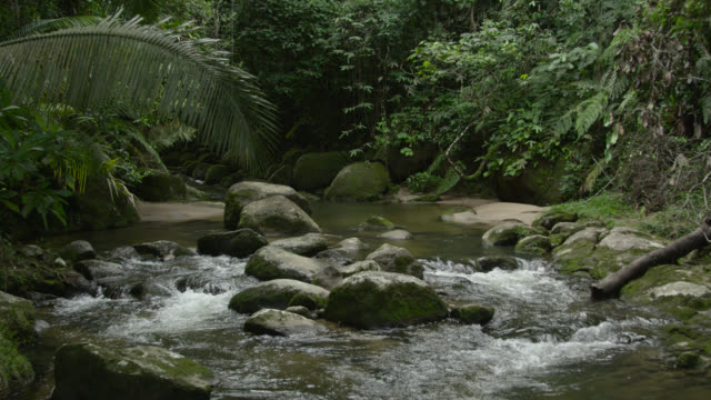 Track over river flowing through rainforest.