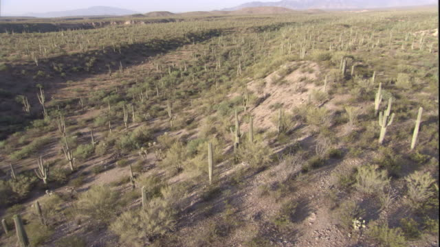 Track over Saguaro cacti in the Sonoran Desert. Available in HD.