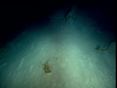 track over silty sea bed, cayman islands - terra brulla video stock e b–roll