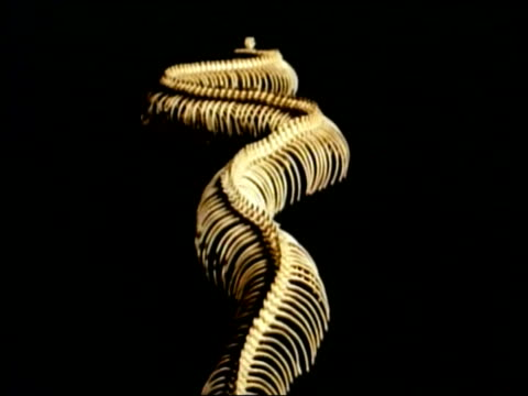 MCU Track over snake skeleton, black background, Studio