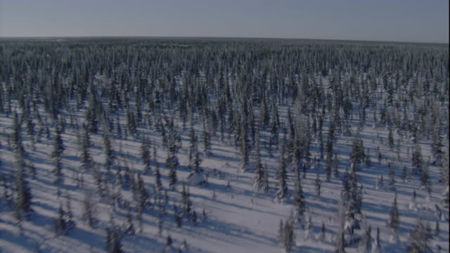 track over snowy boreal forest, churchill, canada. available in hd. - boreal forest stock videos & royalty-free footage
