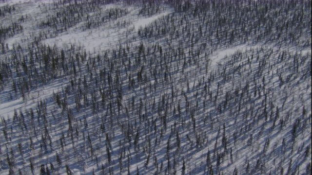 track over snowy boreal forest, churchill, canada available in hd. - boreal forest stock videos & royalty-free footage