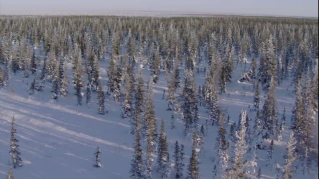 track over snowy boreal forest, churchill, canada. available in hd. - manitoba stock videos & royalty-free footage