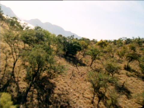 track over valley towards lake and distant mountain range. - tropischer baum stock-videos und b-roll-filmmaterial