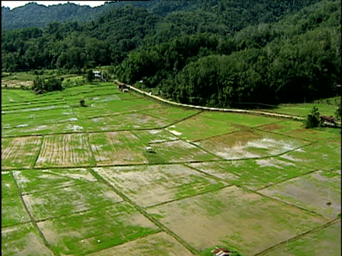 stockvideo's en b-roll-footage met track over waterlogged paddy fields thick forest covered hills in background borneo - cereal plant