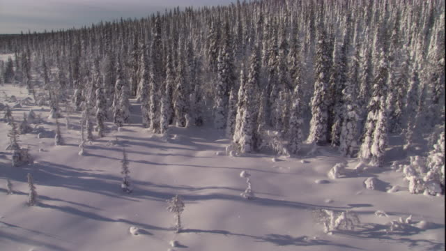 track past a snowy boreal forest. available in hd. - boreal forest stock videos & royalty-free footage