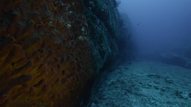 vídeos de stock, filmes e b-roll de track past corals growing on yonaguni monument. japan - coral cnidário