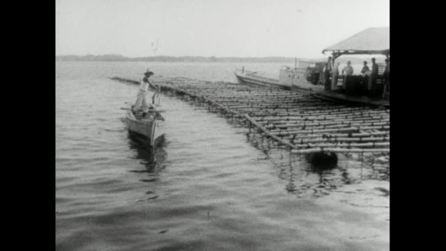 track past floating rafts on oyster farm in japan; 1959 - 1950 1959 stock videos & royalty-free footage