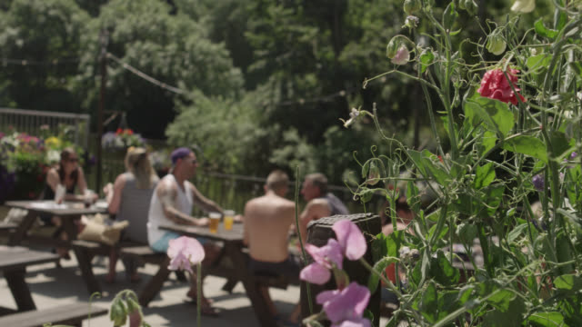 Track past flowers to reveal people drinking in pub garden, Bristol, England