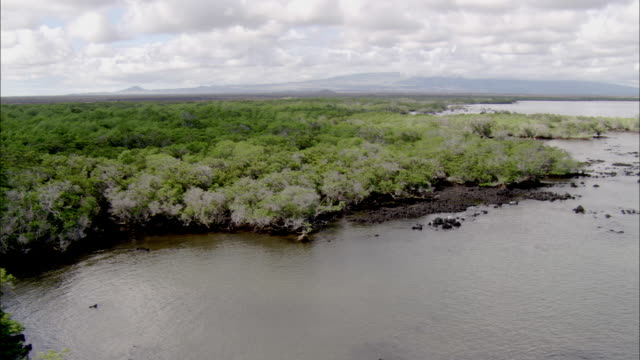 track past mangroves isabela galapagos islands available in hd. - südamerika stock-videos und b-roll-filmmaterial