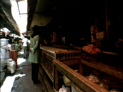 track past market stalls with caged live animals bukittinggi town indonesia - pferch stock-videos und b-roll-filmmaterial