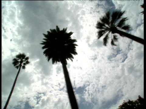Track past palm trees silhouetted against cloudy sky Hollywood