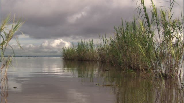 track past reed beds in lac alaotra, madagascar - reed grass family stock videos and b-roll footage