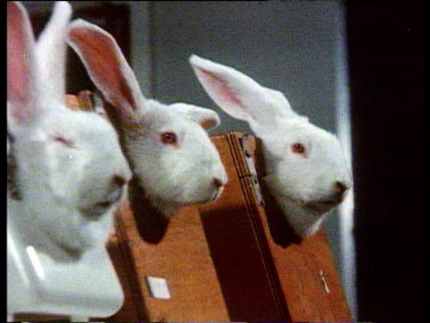 track past row of rabbits in lab uk 1970's - squiggle stock videos & royalty-free footage