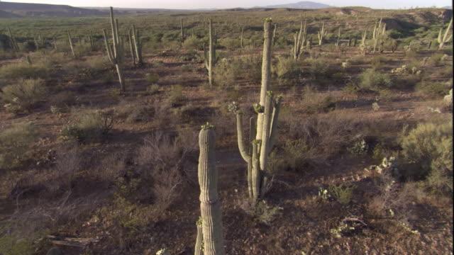 vídeos y material grabado en eventos de stock de track past saguaro cacti in the sonoran desert. available in hd. - cactus saguaro