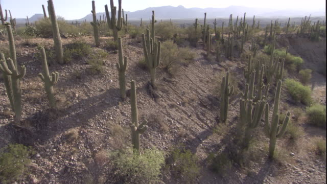 track past saguaro cacti in the sonoran desert. available in hd. - sonoran desert stock videos & royalty-free footage