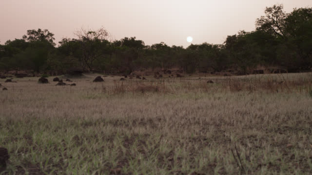 vídeos de stock e filmes b-roll de track past termite mounds on grassland at sunset, senegal - senegal
