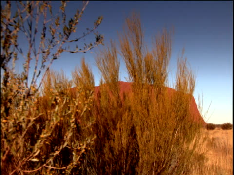 Track right across Uluru looming large in distance long grass and bushes in foreground Australia